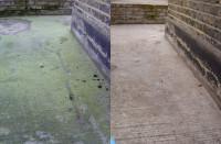 cwc-algae-pics.jpg