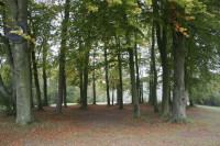 tyrrells-wood-wood.jpg