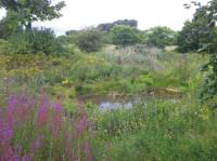Minchinhampton Pond