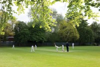 BluecoatSchool Cricket