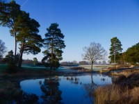 Blue skies over the heathland...