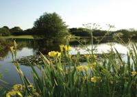 Portmore 8th Pond