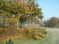 dec-golf-diary-trees.jpg