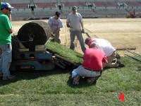 New turf unrolled