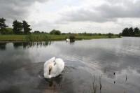 NewCourse-SwanMain.jpg