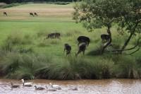 ForestOfArden-Deer.jpg