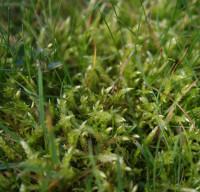 mossy.jpg