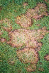 Picture1-Fusarium-low.jpg