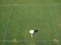Stri trial showing results of Sierraform GT (slow release fertilser) and H2Prowetting agent.jpg