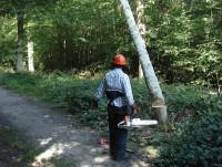 TreeFelling3