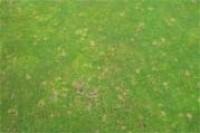 brownspot.jpg