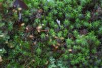 Moss2.jpg