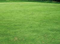 Greg Evans Inherited Golf Green