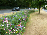 Colourful praire style planting on a highway