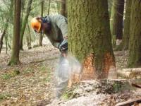 TreeFelling1