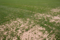 2006-rfu-dry-sand.jpg