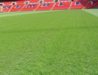 100% ryegrass mix special to Wembley
