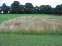 STRI trial   untreated