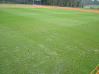 december cricket square