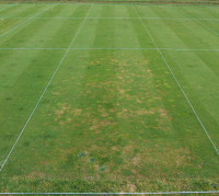 Fusarium Snow Mould trial   Untreated front preventative application surround