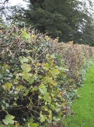 Mixed hedging.jpg