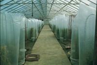 Growth tubes