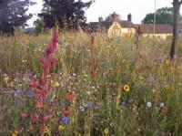wild-flower-mixes-3.jpg