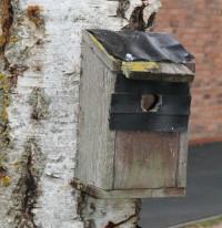 Stratford BirdBox
