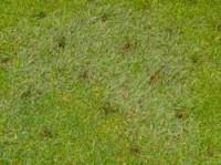 john-o-gaunt-bent-grass-017.jpg
