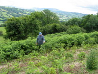 Micron WeedSwiper. Bracken in Wales. That in the foreground has been \'wiped\'