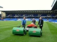 Everton-Mastiff.jpg