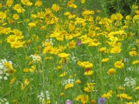 wildflowers pic 2