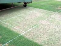 aug-cricket-diary-crease-ma.jpg