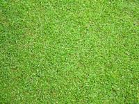 grass-image.jpg