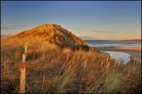 ReayGC Dune