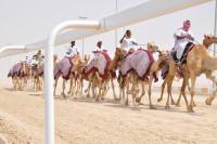 Duralock Camel Track Qatar
