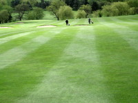 AE  Turf quality on fairway and the benefits of applying Iron