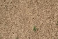 cricet-dry-sedd-o6.jpg