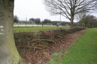 Coventry-Hedge2.jpg