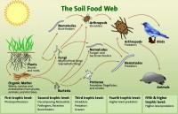 SoilFoodWeb