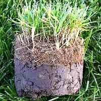 thatch-in-grass.jpg
