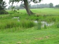 IMG_1761  Overgrown pond on 13th W\'loo  Sherfield Oaks.JPG