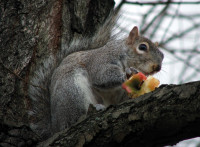 GreySquirrel RGBStock