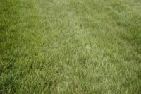 aintree-grass.jpg