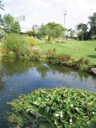Coventry-Pond.jpg