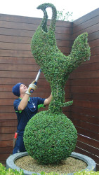 Spurs Topiary