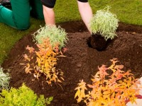 Rolawn Beds & Borders Topsoil.jpg