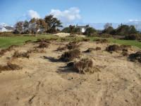 RSD 2nd lh sand heather