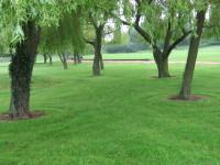 IMG_3834  Tidy presentation around tree bases  Stapleford Abbotts.JPG