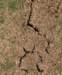 aug-dry-06-cracks.jpg